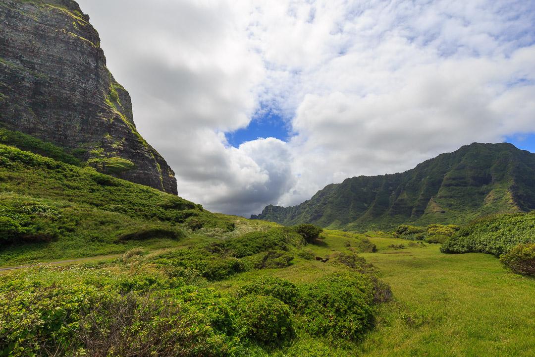 Oahu-121